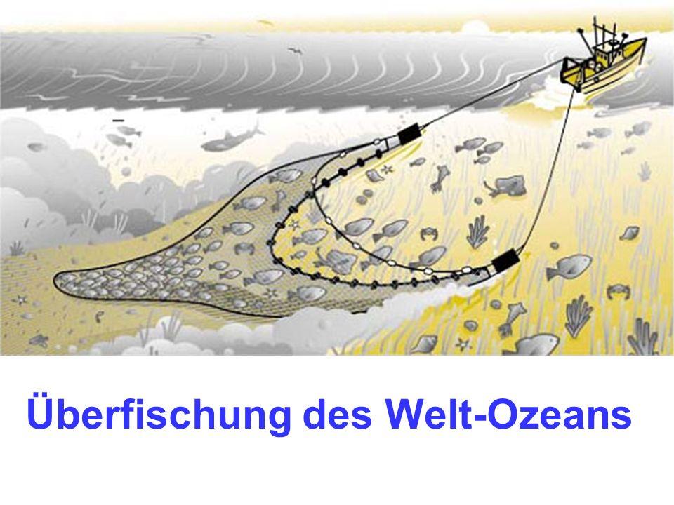 Überfischung des Welt-Ozeans