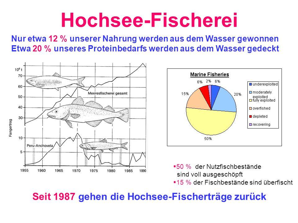 Seit 1987 gehen die Hochsee-Fischerträge zurück 50 % der Nutzfischbestände sind voll ausgeschöpft 15 % der Fischbestände sind überfischt Nur etwa 12 %