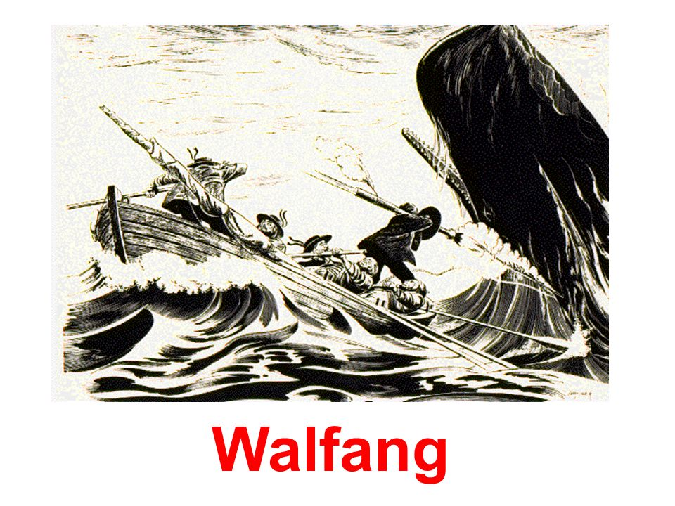 Walfang