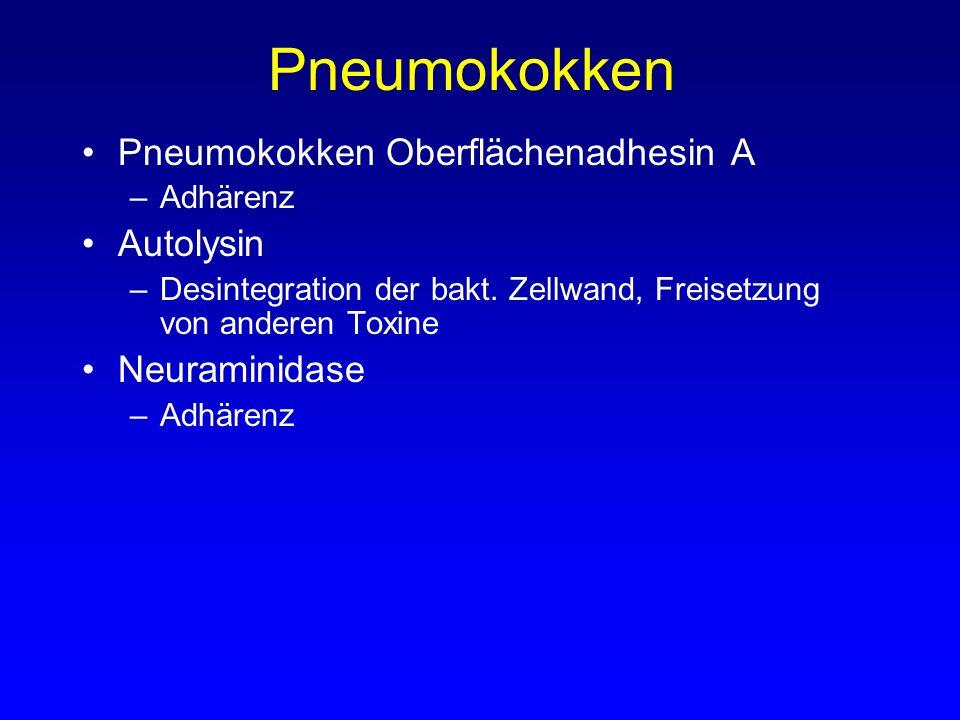Pneumokokken Pneumokokken Oberflächenadhesin A –Adhärenz Autolysin –Desintegration der bakt. Zellwand, Freisetzung von anderen Toxine Neuraminidase –A