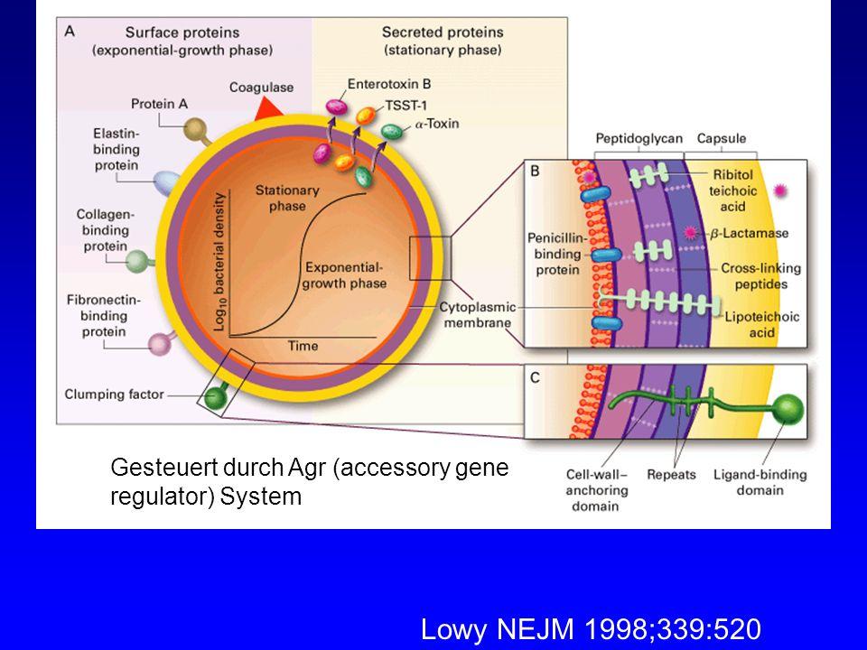 Lowy NEJM 1998;339:520 Gesteuert durch Agr (accessory gene regulator) System