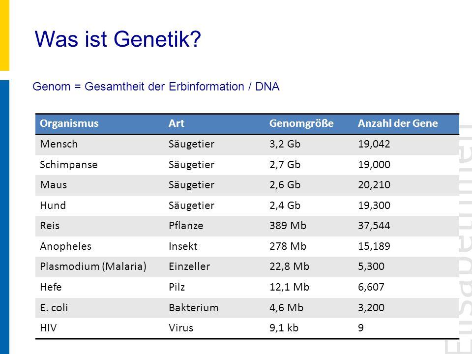Was ist Genetik? Genom = Gesamtheit der Erbinformation / DNA OrganismusArtGenomgrößeAnzahl der Gene MenschSäugetier3,2 Gb19,042 SchimpanseSäugetier2,7