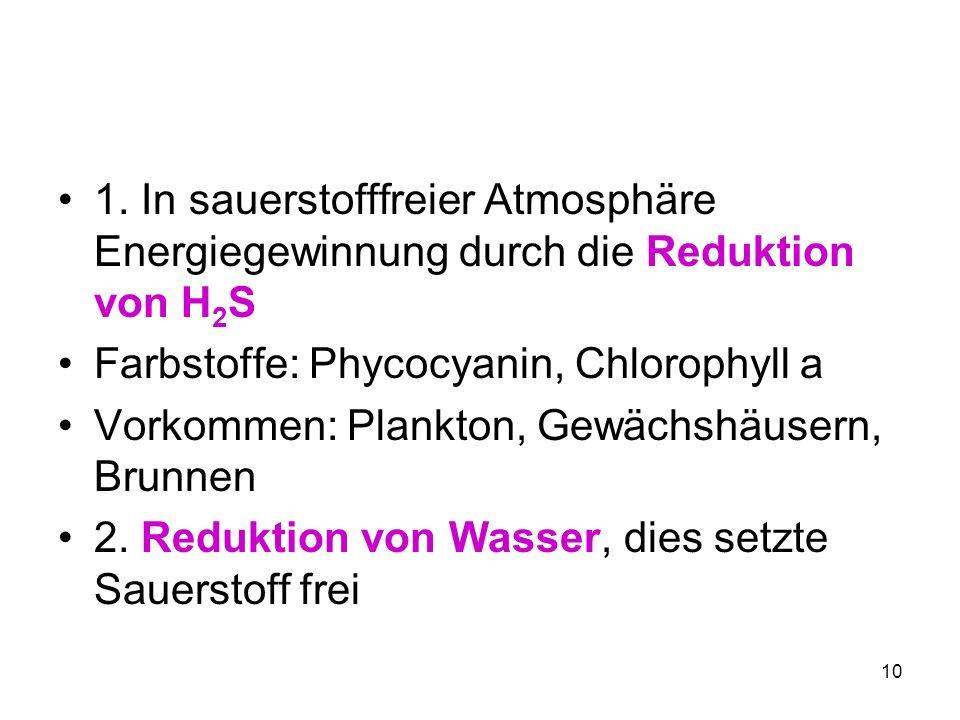10 1. In sauerstofffreier Atmosphäre Energiegewinnung durch die Reduktion von H 2 S Farbstoffe: Phycocyanin, Chlorophyll a Vorkommen: Plankton, Gewäch