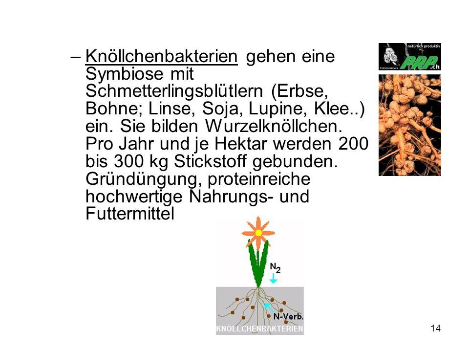 14 –Knöllchenbakterien gehen eine Symbiose mit Schmetterlingsblütlern (Erbse, Bohne; Linse, Soja, Lupine, Klee..) ein. Sie bilden Wurzelknöllchen. Pro