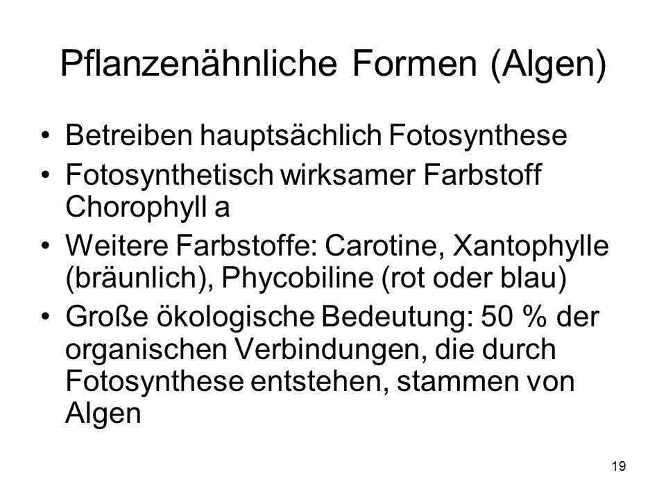19 Pflanzenähnliche Formen (Algen) Betreiben hauptsächlich Fotosynthese Fotosynthetisch wirksamer Farbstoff Chorophyll a Weitere Farbstoffe: Carotine,