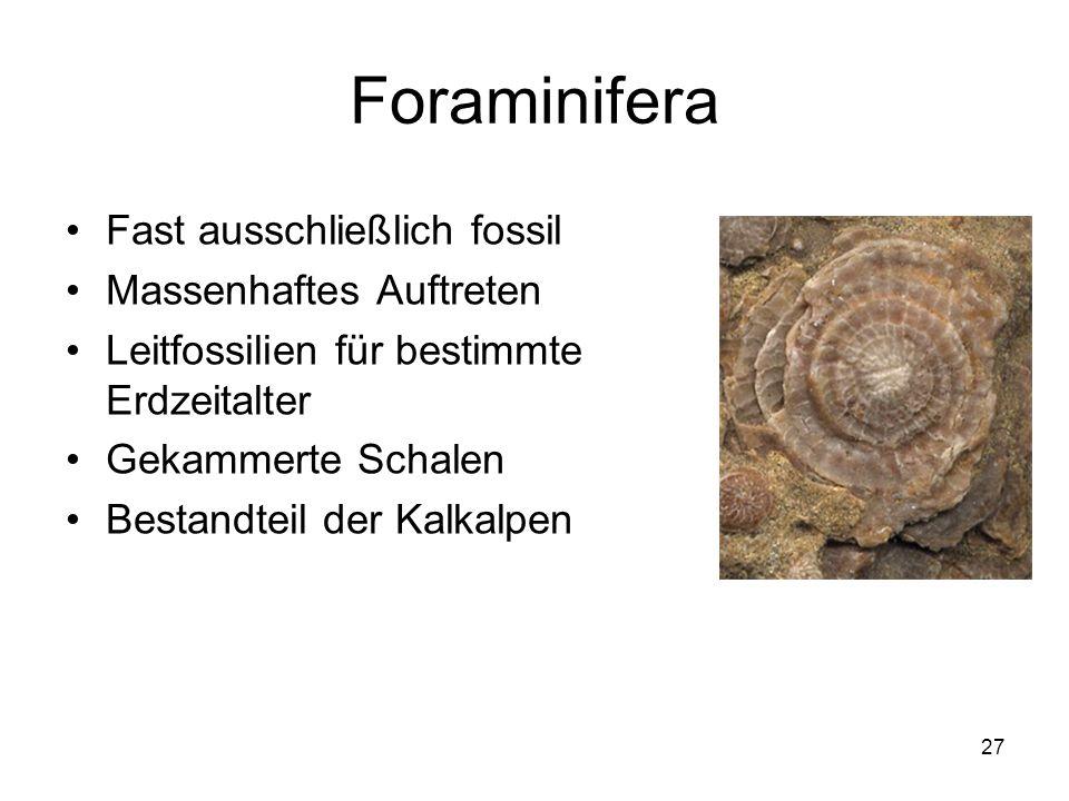 27 Foraminifera Fast ausschließlich fossil Massenhaftes Auftreten Leitfossilien für bestimmte Erdzeitalter Gekammerte Schalen Bestandteil der Kalkalpe