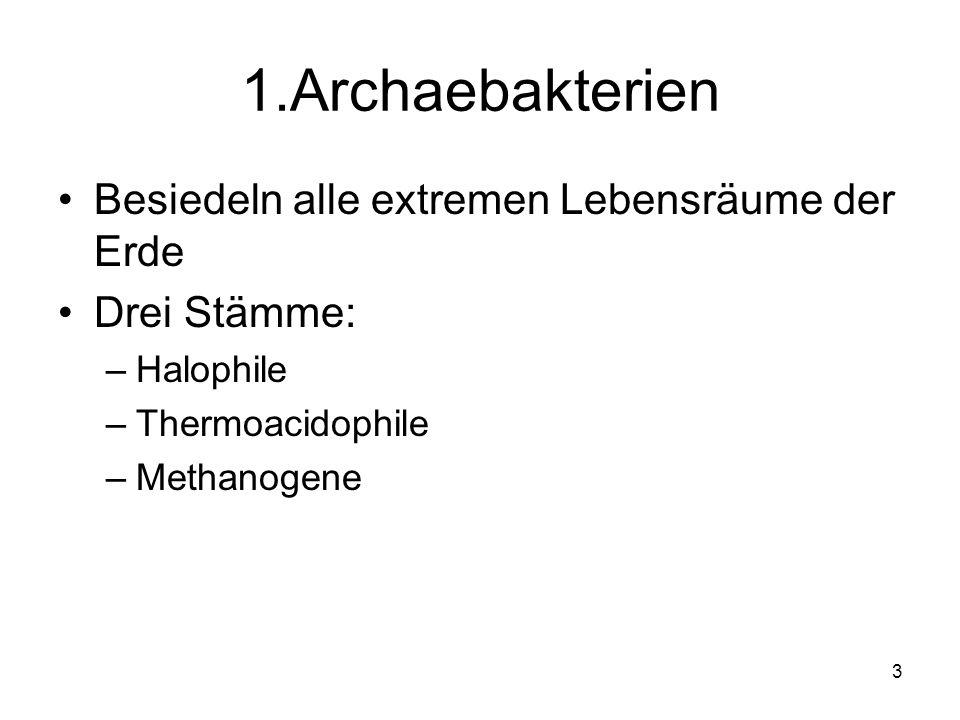 3 1.Archaebakterien Besiedeln alle extremen Lebensräume der Erde Drei Stämme: –Halophile –Thermoacidophile –Methanogene