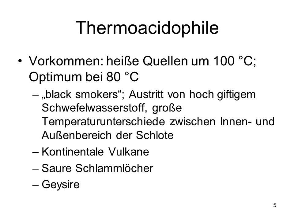 5 Thermoacidophile Vorkommen: heiße Quellen um 100 °C; Optimum bei 80 °C –black smokers; Austritt von hoch giftigem Schwefelwasserstoff, große Tempera