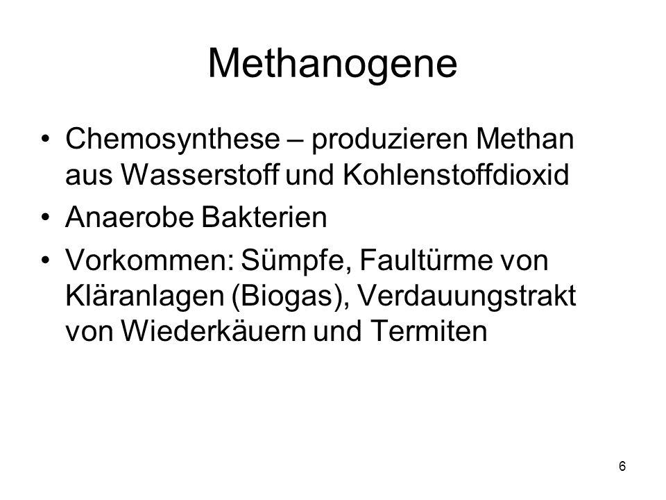 6 Methanogene Chemosynthese – produzieren Methan aus Wasserstoff und Kohlenstoffdioxid Anaerobe Bakterien Vorkommen: Sümpfe, Faultürme von Kläranlagen