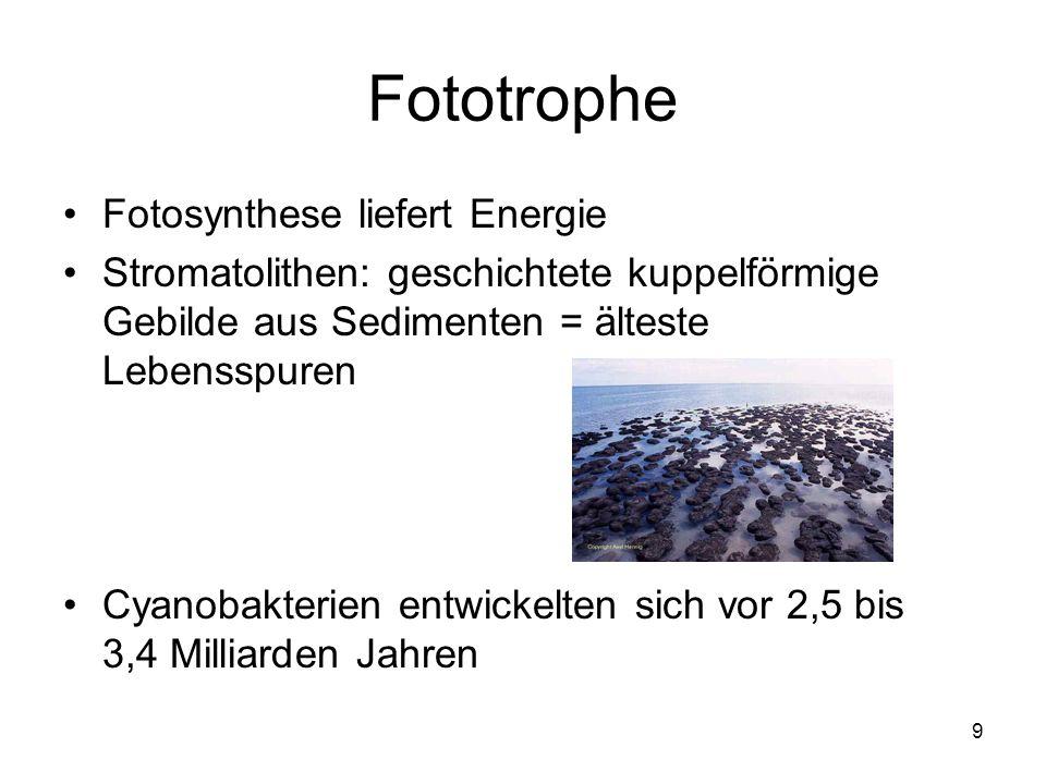 9 Fototrophe Fotosynthese liefert Energie Stromatolithen: geschichtete kuppelförmige Gebilde aus Sedimenten = älteste Lebensspuren Cyanobakterien entw