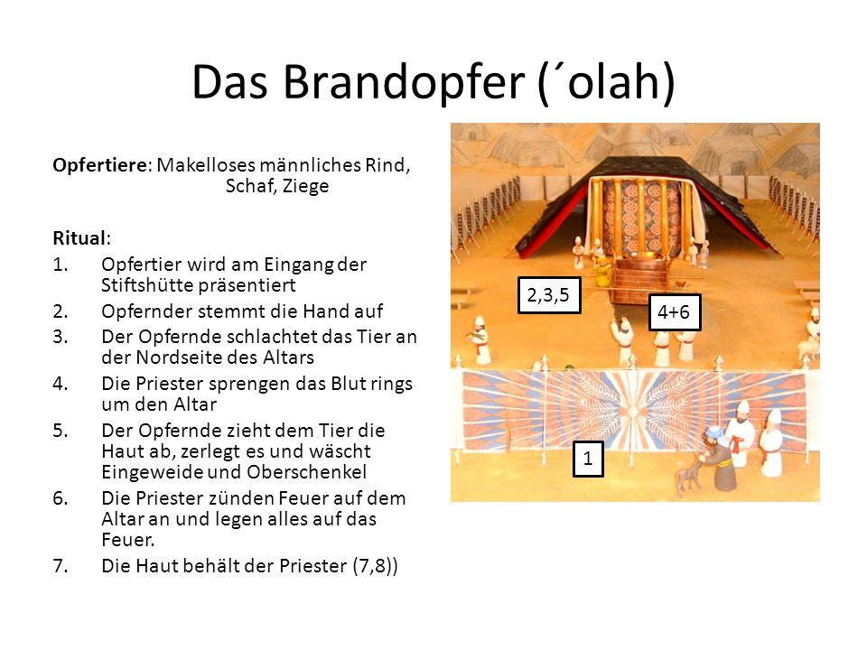 Das Brandopfer (´olah) Opfertiere: Makelloses männliches Rind, Schaf, Ziege Ritual: 1.Opfertier wird am Eingang der Stiftshütte präsentiert 2.Opfernde