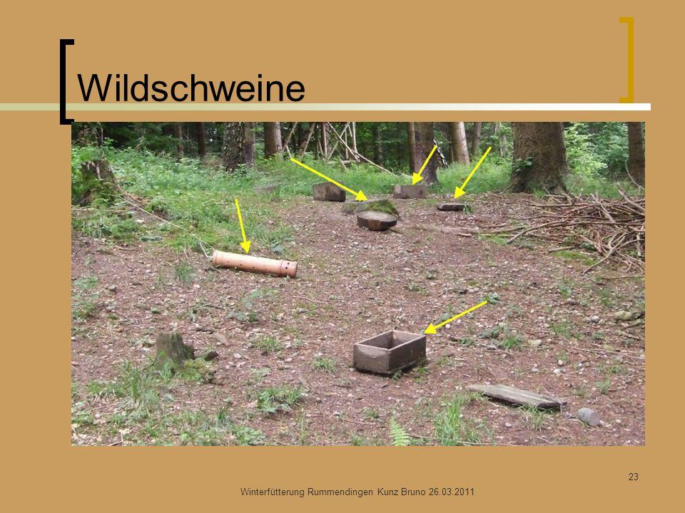 Wildschweine Winterfütterung Rummendingen Kunz Bruno 26.03.2011 23
