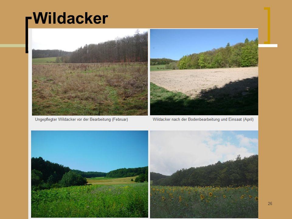 Wildacker Winterfütterung Rummendingen Kunz Bruno 26.03.2011 26