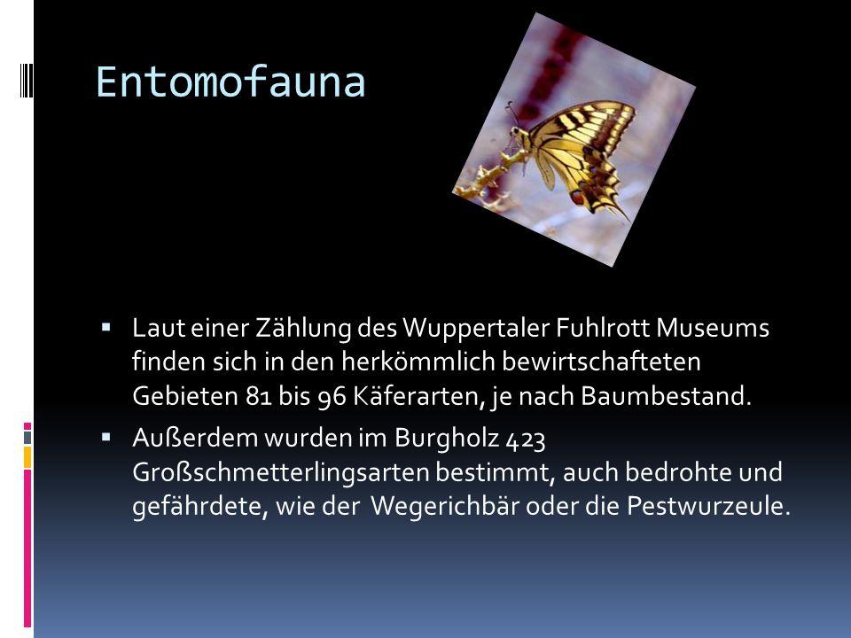 Entomofauna Laut einer Zählung des Wuppertaler Fuhlrott Museums finden sich in den herkömmlich bewirtschafteten Gebieten 81 bis 96 Käferarten, je nach Baumbestand.