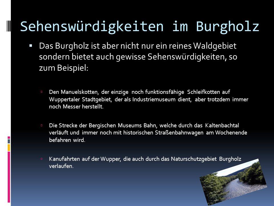 Sehenswürdigkeiten im Burgholz Das Burgholz ist aber nicht nur ein reines Waldgebiet sondern bietet auch gewisse Sehenswürdigkeiten, so zum Beispiel: Den Manuelskotten, der einzige noch funktionsfähige Schleifkotten auf Wuppertaler Stadtgebiet, der als Industriemuseum dient, aber trotzdem immer noch Messer herstellt.