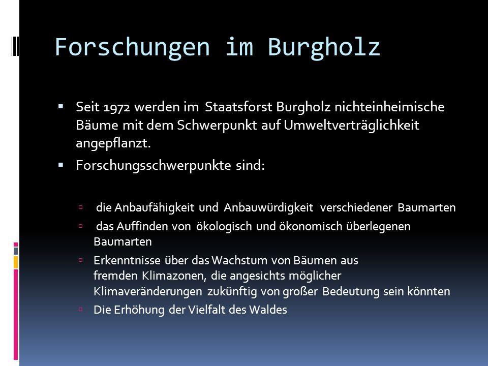 Forschungen im Burgholz Seit 1972 werden im Staatsforst Burgholz nichteinheimische Bäume mit dem Schwerpunkt auf Umweltverträglichkeit angepflanzt.