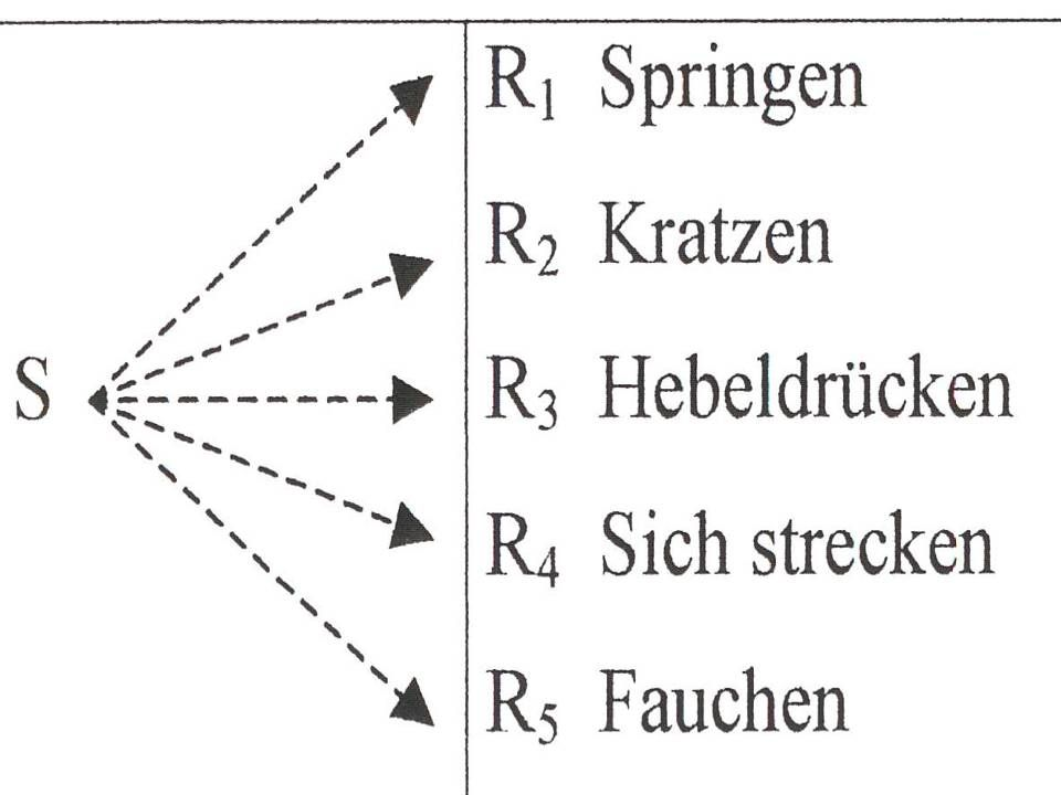 Effektgesetz Grundprinzip des operanten Konditionierens: Lernen erfolgt durch Effekte, die der Organismus in der Umwelt hervorruft Verhalten ist opera