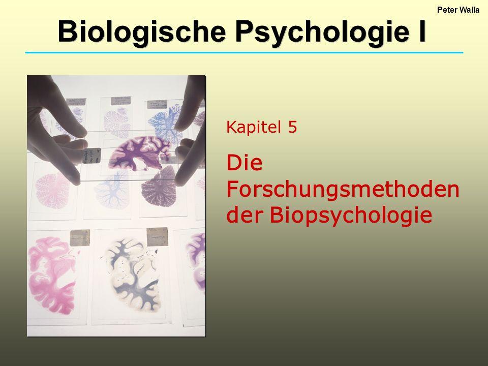 Kapitel 5 Die Forschungsmethoden der Biopsychologie Biologische Psychologie I Peter Walla