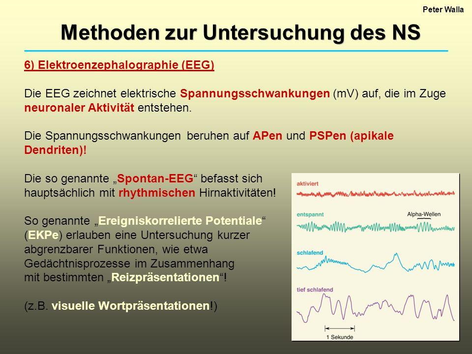 Peter Walla Methoden zur Untersuchung des NS 6) Elektroenzephalographie (EEG) Die EEG zeichnet elektrische Spannungsschwankungen (mV) auf, die im Zuge neuronaler Aktivität entstehen.
