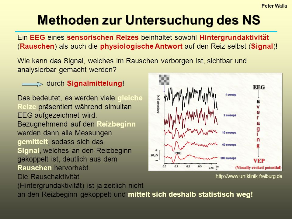 Peter Walla Methoden zur Untersuchung des NS Ein EEG eines sensorischen Reizes beinhaltet sowohl Hintergrundaktivität (Rauschen) als auch die physiolo