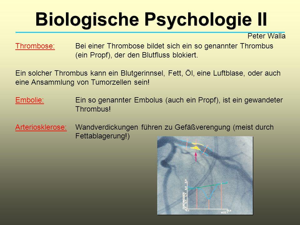 Biologische Psychologie II Peter Walla Thrombose: Bei einer Thrombose bildet sich ein so genannter Thrombus (ein Propf), der den Blutfluss blokiert. E