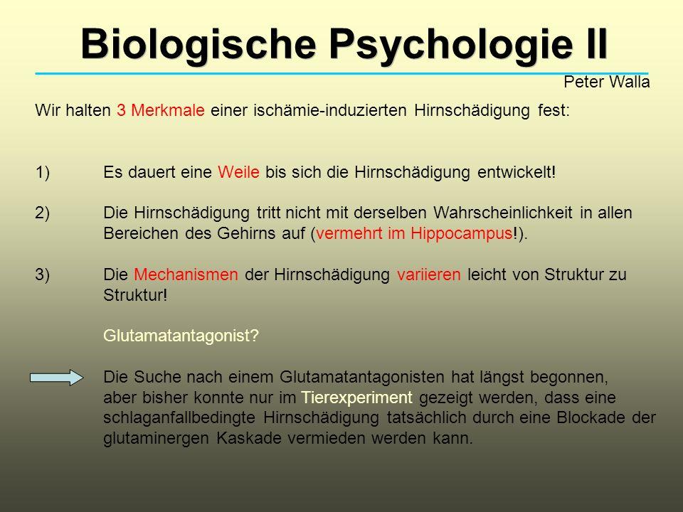Biologische Psychologie II Peter Walla Wir halten 3 Merkmale einer ischämie-induzierten Hirnschädigung fest: 1) Es dauert eine Weile bis sich die Hirn