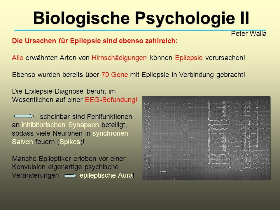 Die Ursachen für Epilepsie sind ebenso zahlreich: Alle erwähnten Arten von Hirnschädigungen können Epilepsie verursachen! Ebenso wurden bereits über 7