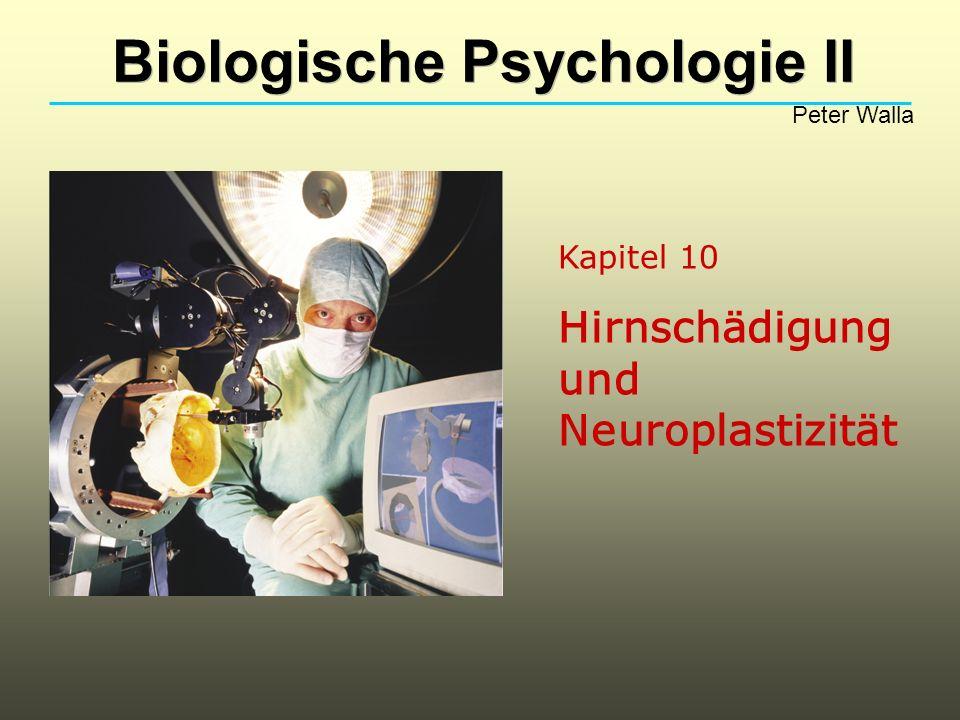 Kapitel 10 Hirnschädigung und Neuroplastizität Biologische Psychologie II Peter Walla