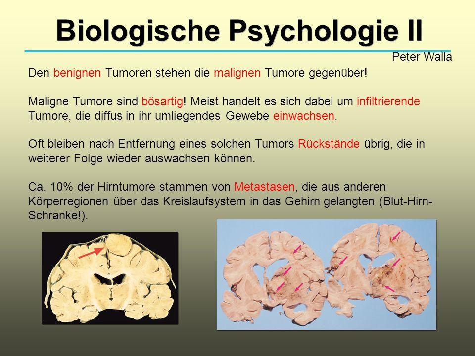Biologische Psychologie II Peter Walla Den benignen Tumoren stehen die malignen Tumore gegenüber! Maligne Tumore sind bösartig! Meist handelt es sich