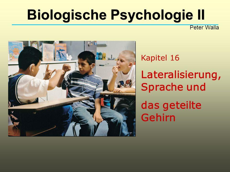 Kapitel 16 Lateralisierung, Sprache und das geteilte Gehirn Biologische Psychologie II Peter Walla