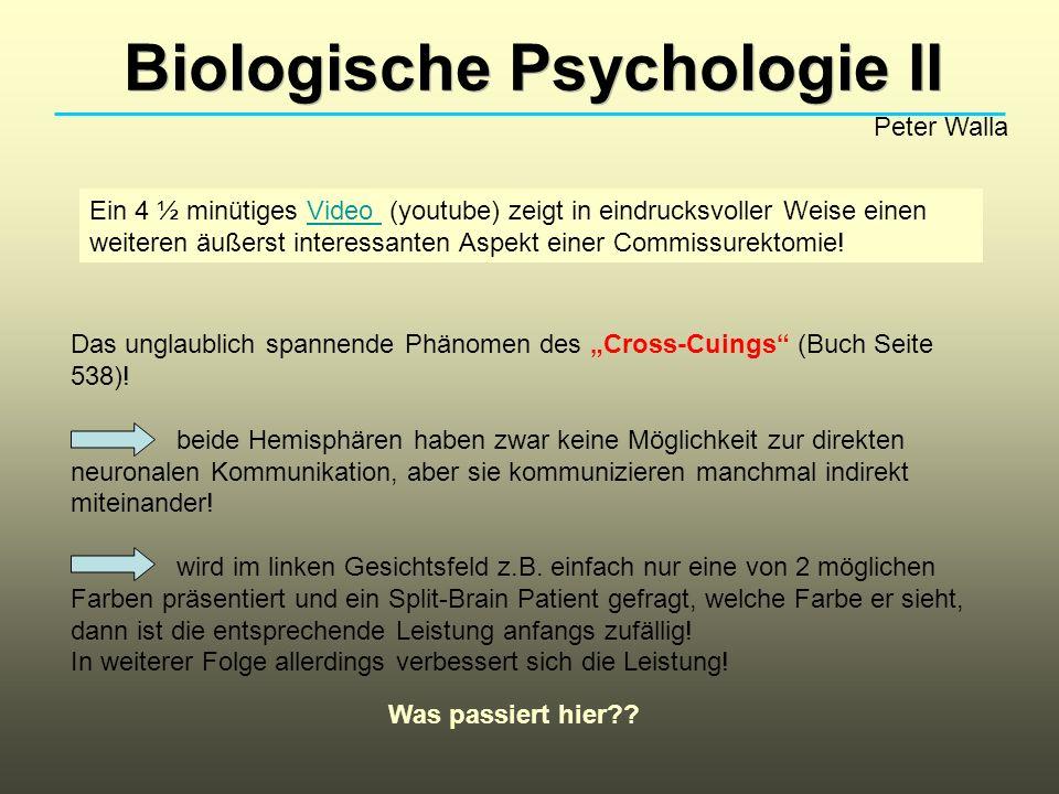 Biologische Psychologie II Peter Walla Ein 4 ½ minütiges Video (youtube) zeigt in eindrucksvoller Weise einen weiteren äußerst interessanten Aspekt ei