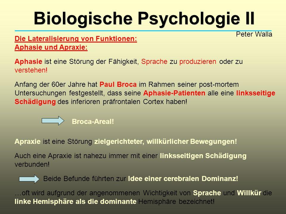 Biologische Psychologie II Peter Walla Die Lateralisierung von Funktionen: Aphasie und Apraxie: Aphasie ist eine Störung der Fähigkeit, Sprache zu pro