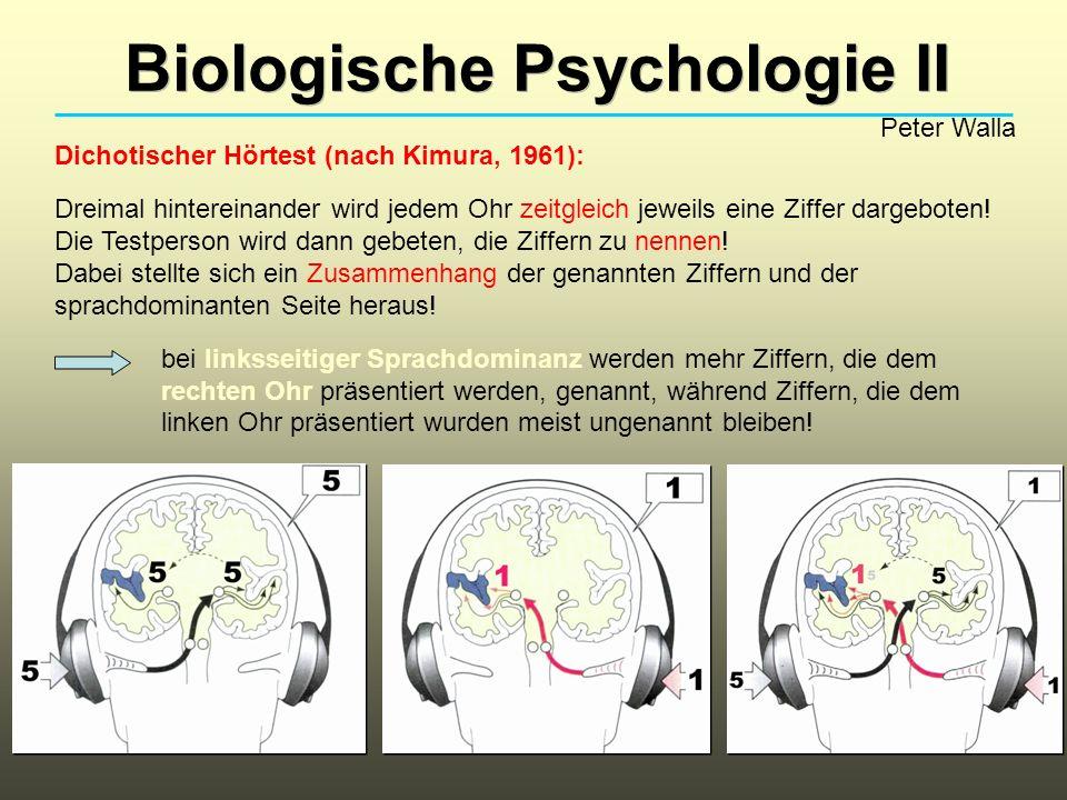 Biologische Psychologie II Peter Walla Dichotischer Hörtest (nach Kimura, 1961): Dreimal hintereinander wird jedem Ohr zeitgleich jeweils eine Ziffer