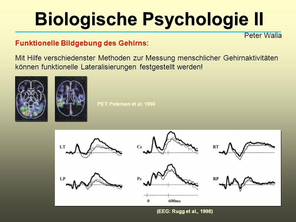 Biologische Psychologie II Peter Walla Funktionelle Bildgebung des Gehirns: Mit Hilfe verschiedenster Methoden zur Messung menschlicher Gehirnaktivitä