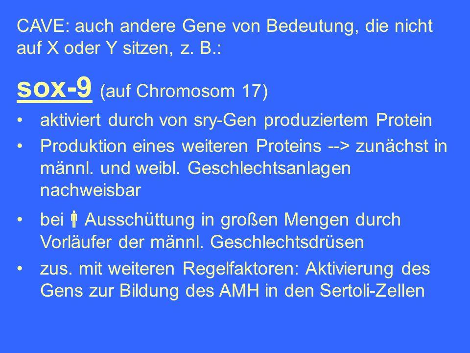 CAVE: auch andere Gene von Bedeutung, die nicht auf X oder Y sitzen, z. B.: sox-9 (auf Chromosom 17) aktiviert durch von sry-Gen produziertem Protein