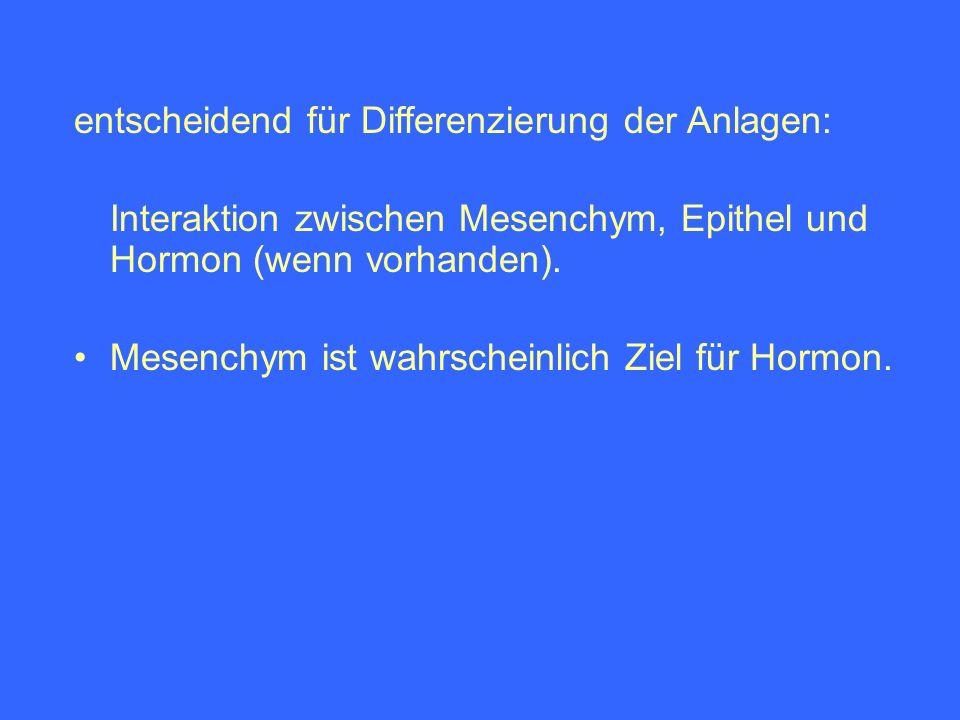 entscheidend für Differenzierung der Anlagen: Interaktion zwischen Mesenchym, Epithel und Hormon (wenn vorhanden). Mesenchym ist wahrscheinlich Ziel f