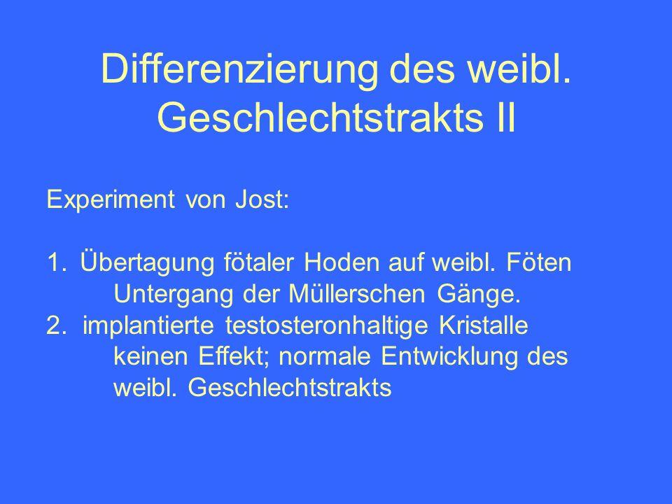 Differenzierung des weibl. Geschlechtstrakts II Experiment von Jost: 1.Übertagung fötaler Hoden auf weibl. Föten Untergang der Müllerschen Gänge. 2. i