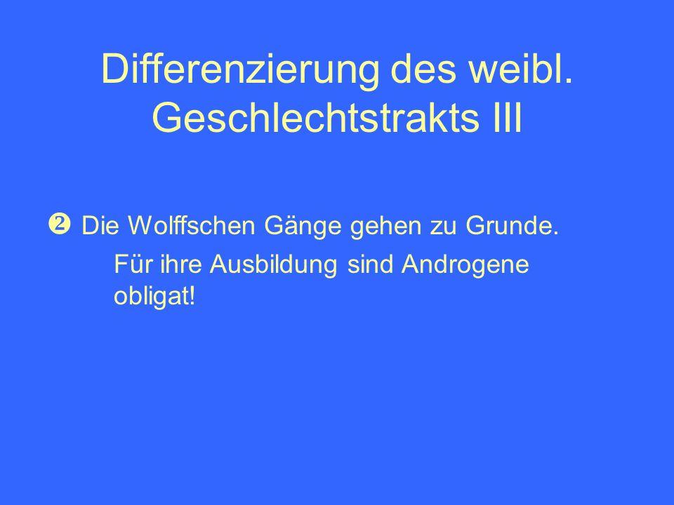 Differenzierung des weibl. Geschlechtstrakts III Die Wolffschen Gänge gehen zu Grunde. Für ihre Ausbildung sind Androgene obligat!