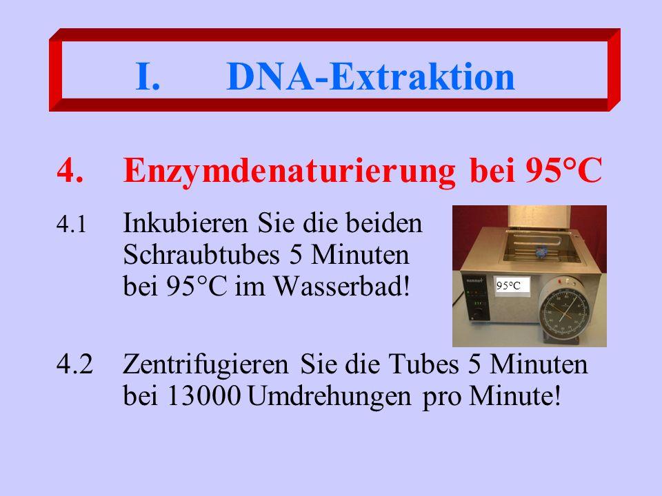 4.Enzymdenaturierung bei 95°C 4.1 Inkubieren Sie die beiden Schraubtubes 5 Minuten bei 95°C im Wasserbad! 4.2Zentrifugieren Sie die Tubes 5 Minuten be