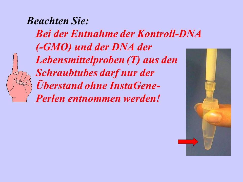 Beachten Sie: Bei der Entnahme der Kontroll-DNA (-GMO) und der DNA der Lebensmittelproben (T) aus den Schraubtubes darf nur der Überstand ohne InstaGe