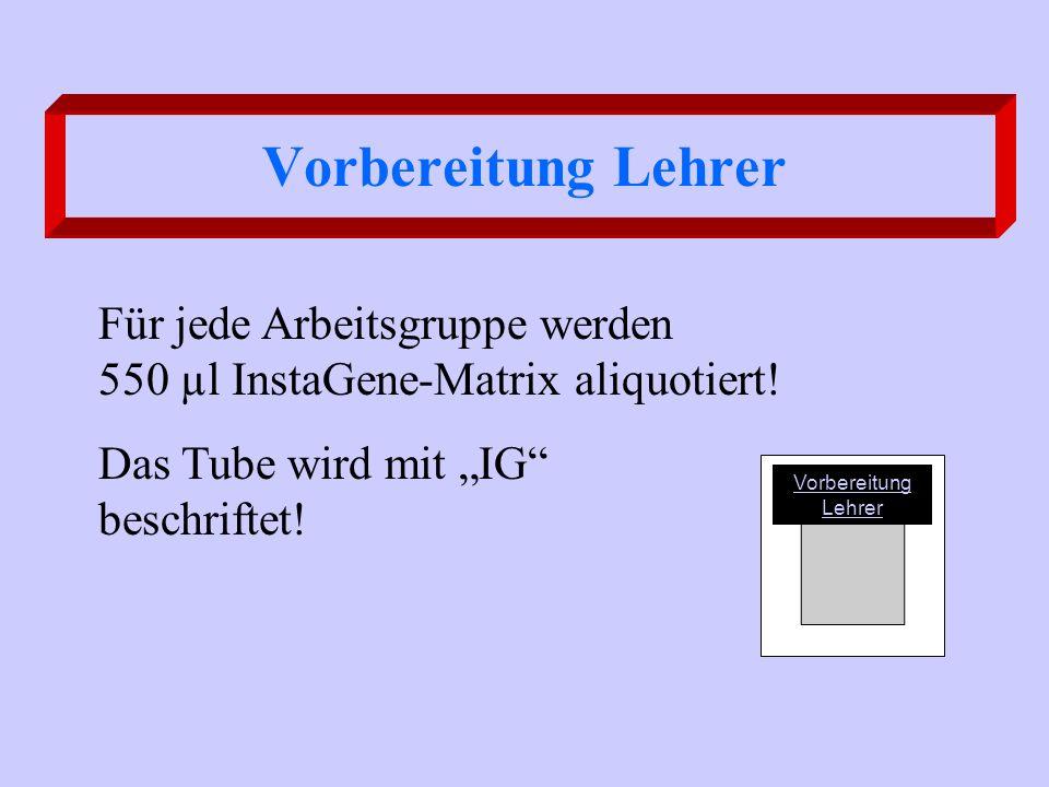 1.Führen Sie den Nachweis der PCR-Produkte entsprechend Ihres Arbeitsauftrages als Agarose- oder Polyacrylamid-Gelelektrophorese durch.