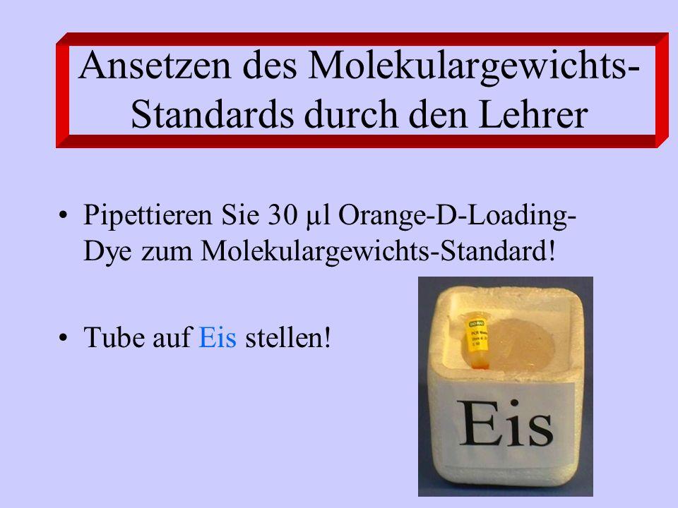 Ansetzen des Molekulargewichts- Standards durch den Lehrer Pipettieren Sie 30 µl Orange-D-Loading- Dye zum Molekulargewichts-Standard! Tube auf Eis st