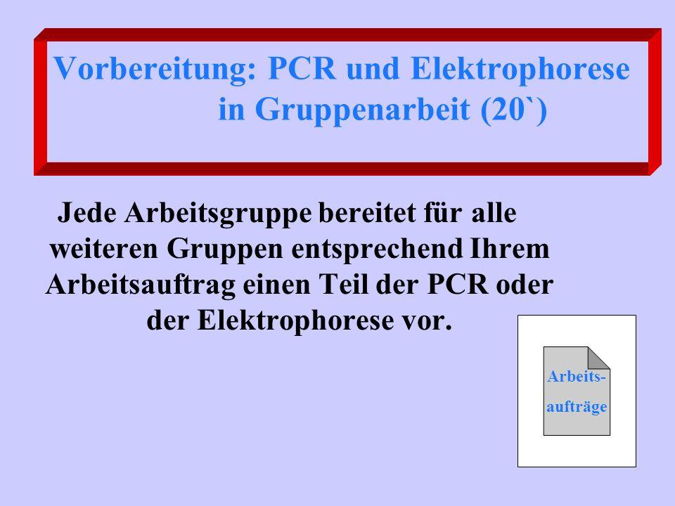 Vorbereitung: PCR und Elektrophorese in Gruppenarbeit (20`) Jede Arbeitsgruppe bereitet für alle weiteren Gruppen entsprechend Ihrem Arbeitsauftrag ei