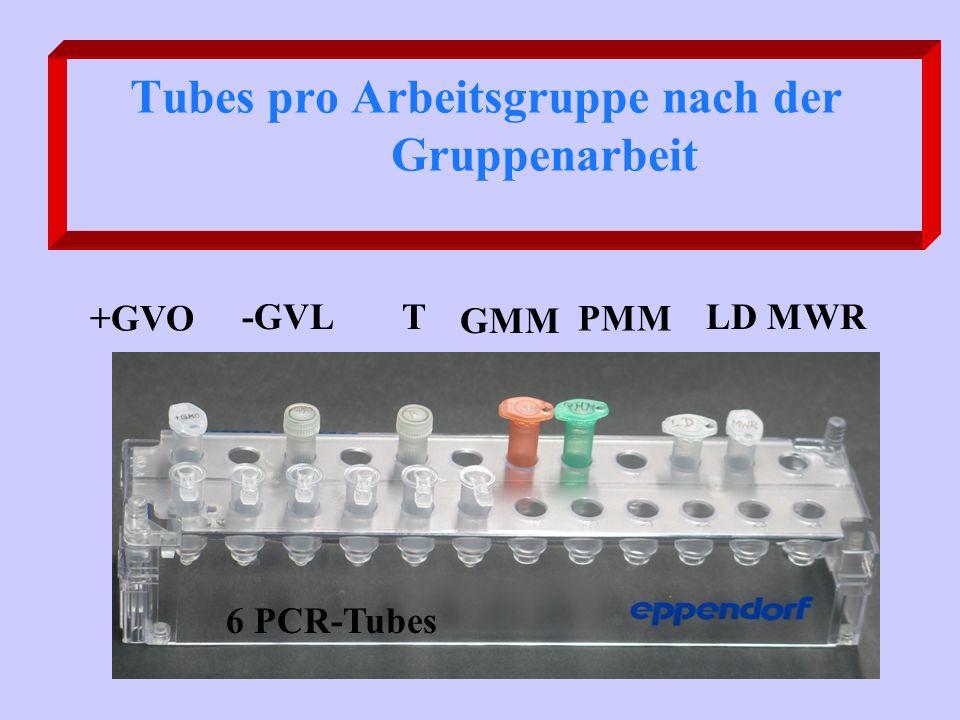 Tubes pro Arbeitsgruppe nach der Gruppenarbeit +GVO -GVLT GMM PMM LD MWR 6 PCR-Tubes