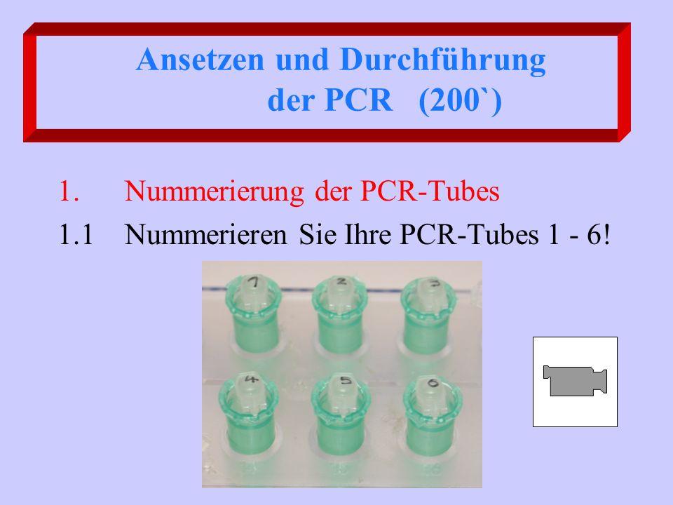 Ansetzen und Durchführung der PCR (200`) 1. Nummerierung der PCR-Tubes 1.1 Nummerieren Sie Ihre PCR-Tubes 1 - 6!