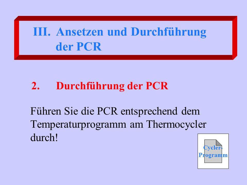 2.Durchführung der PCR Führen Sie die PCR entsprechend dem Temperaturprogramm am Thermocycler durch! III. Ansetzen und Durchführung der PCR Cycler- Pr