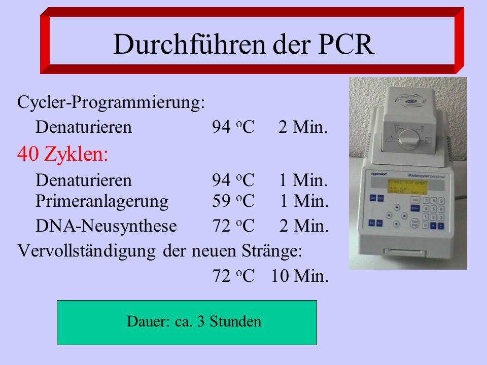 Durchführen der PCR Cycler-Programmierung: Denaturieren94 o C 2 Min. 40 Zyklen: Denaturieren94 o C 1 Min. Primeranlagerung59 o C 1 Min. DNA-Neusynthes