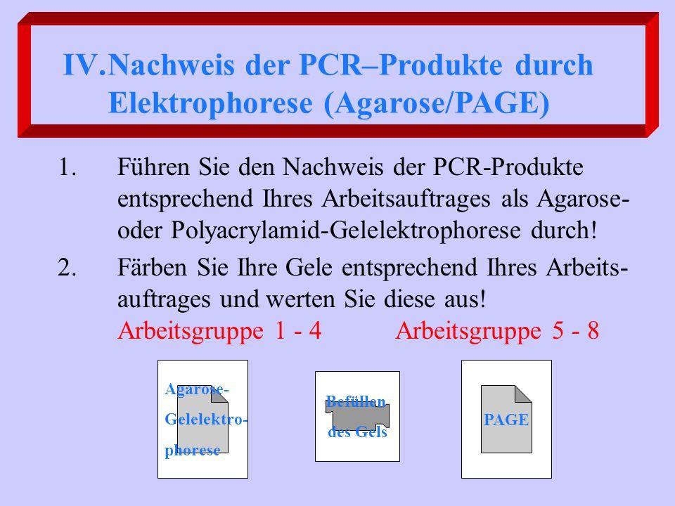 1.Führen Sie den Nachweis der PCR-Produkte entsprechend Ihres Arbeitsauftrages als Agarose- oder Polyacrylamid-Gelelektrophorese durch! 2.Färben Sie I