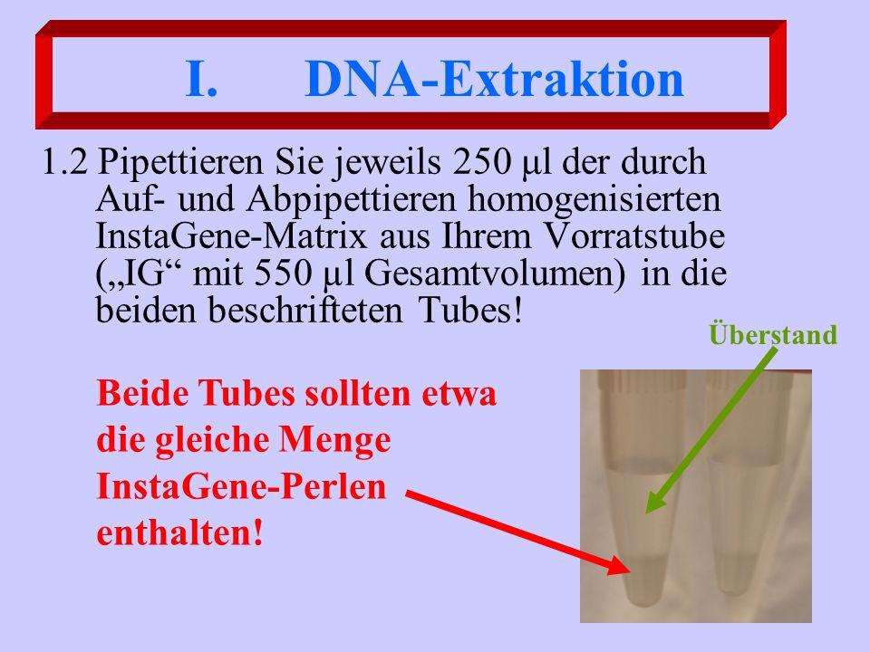 I. DNA-Extraktion 1.2 Pipettieren Sie jeweils 250 μl der durch Auf- und Abpipettieren homogenisierten InstaGene-Matrix aus Ihrem Vorratstube (IG mit 5