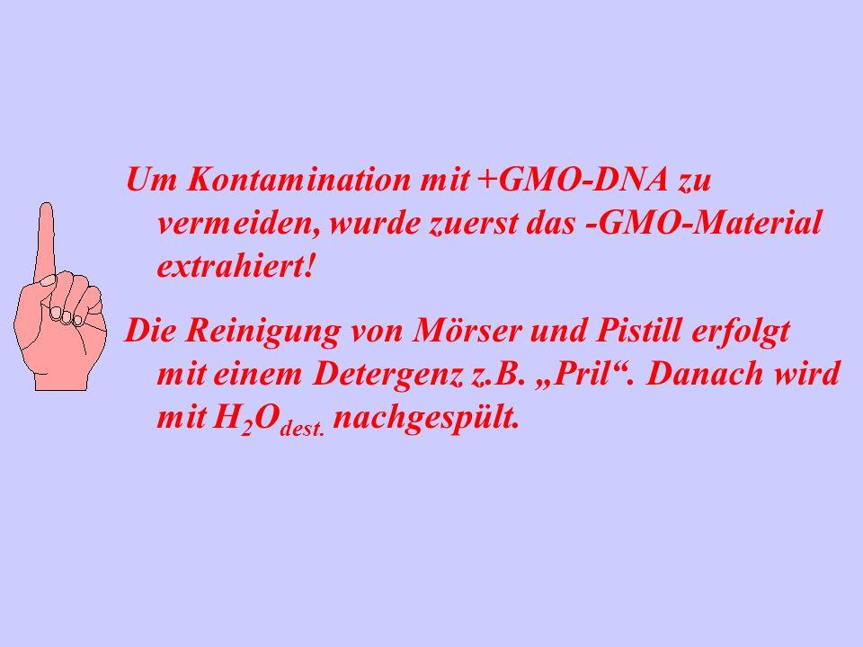 Um Kontamination mit +GMO-DNA zu vermeiden, wurde zuerst das -GMO-Material extrahiert! Die Reinigung von Mörser und Pistill erfolgt mit einem Detergen